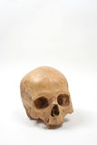 Skull isolated. Old human skull (damaged) isolated on white background with copy space Royalty Free Stock Photo