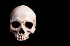 Skull Isolated on black Stock Photos