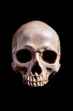 Skull Isolated on black Stock Photography