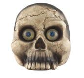 Skull. Isolated on the white background stock image