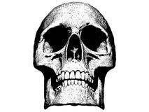 Skull isolated in white background 3d illustration vector illustration