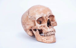 Skull isolated white background. Skull is one part of human. This picture is part isolated white background which show anatomy of head of human royalty free stock photo