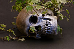 Skull in Ivy. Human Skull lying on side covered in Ivy Royalty Free Stock Photos