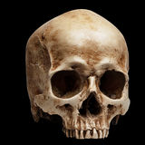 Skull without jaw Royalty Free Stock Photography
