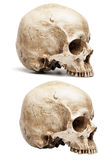 Skull without jaw Royalty Free Stock Image