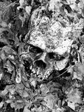 Skull in leaves. Skull buried in leaves, long forgotten Royalty Free Stock Photography