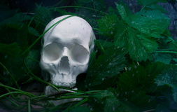 Skull with leaves and rainy weather. Royalty Free Stock Image