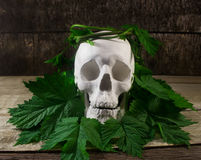 Skull with leaves. Royalty Free Stock Photos