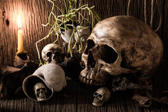Skull and lighting candle. Still life photography : many skull and lighting candle on old wood Royalty Free Stock Images