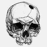 Skull. Line work vector for use vector illustration