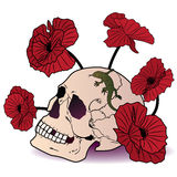 Skull, lizard and poppies Royalty Free Stock Image