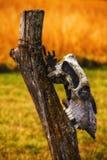 Skull on Log Stock Image