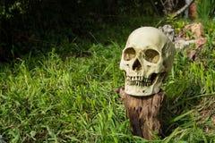 Skull on log Royalty Free Stock Image