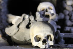 Human Skulls. Skull lying on a background of the bones Royalty Free Stock Photography