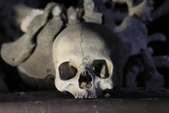 Skull and bones Stock Image