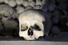White human skull Royalty Free Stock Photography