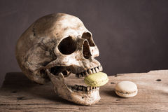 Skull with macaroon. Still life photography : skull with macaroon in the mouth on old wood Royalty Free Stock Image