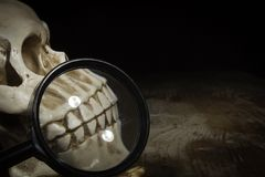 Skull and magnifier. On old wooden table royalty free stock photos
