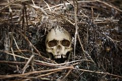The skull of a man in the dry grass close-up. A fake skull lying in the grass last year royalty free stock images