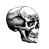 Skull man vector sketch. Painted by hands. Illustration stylized for engraving. The dead head is the symbol of life and death. Adams head royalty free illustration