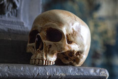 Skull on a Mantelpiece Stock Photography