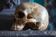 Skull on a Mantelpiece Royalty Free Stock Photography