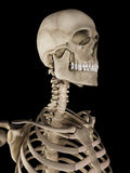 The skull Stock Photography