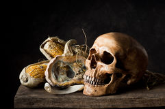 Skull with moldy pumpkin and corn Royalty Free Stock Image