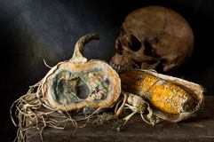 Skull with moldy pumpkin and corn Stock Image