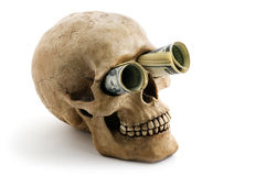 Skull with money Royalty Free Stock Image