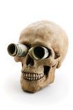 Skull with money Stock Photo