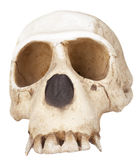 Skull Monkey Royalty Free Stock Photos