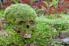 Skull and Moss Stock Images