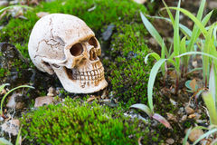 Skull on moss Royalty Free Stock Photos
