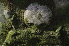 Skull and moss Royalty Free Stock Images