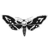 Skull moth Stock Photos