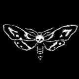 Skull moth Royalty Free Stock Photos