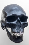 Skull of neanderthal. Close up view stock images