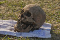 Skull of a Nogai woman. Exhumation. stock image