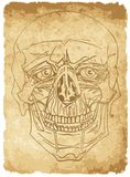 Skull on old paper Royalty Free Stock Photos
