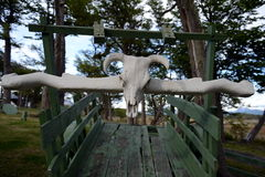 Skull on old wagon settlers on Tierra del Fuego. Stock Images