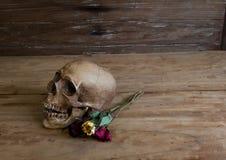 Skull on old wooden floor Royalty Free Stock Photo
