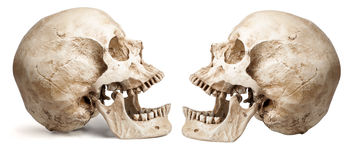 Skull-open mouth Royalty Free Stock Photo