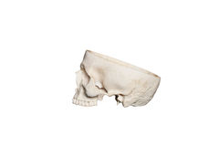 Skull opened Royalty Free Stock Images
