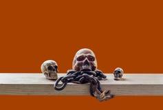 Skull with orange background. Stock Image