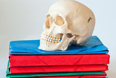 Skull organizer Royalty Free Stock Images