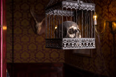 Skull in Ornate Cage Hanging in Candlelit Room Stock Image