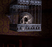 Skull in Ornate Cage in Room with Patterned Wall Royalty Free Stock Image