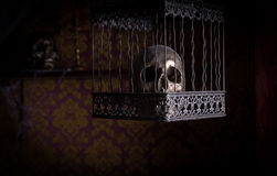 Skull in Ornate Cage in Room with Patterned Wall Stock Photo