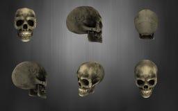 Skull pack Stock Photography